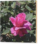 Rose In Flower Bed Wood Print