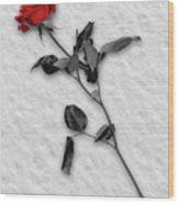 Rose In Snow Wood Print