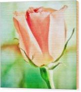 Rose In Window Wood Print