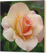 Rose Is A Rose Is A Rose Wood Print by Christine Till