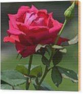 Rose Of Romance Wood Print