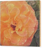 Rose Of Seville Wood Print