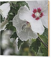 Rose Of Sharon And Bee Wood Print