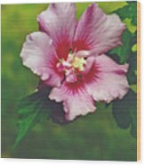 Rose Of Sharon Blossom Wood Print
