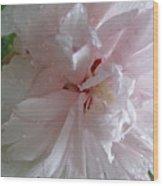 Rose Of Sharon In The Rain Wood Print