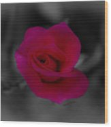 Rose Of Solitude Wood Print by DigiArt Diaries by Vicky B Fuller