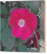 Rose On A Trellis Wood Print