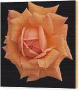 Rose On Black Velvet Wood Print