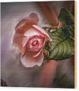 Rose On Paint #g5 Wood Print