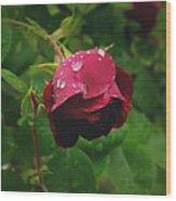 Rose On The Vine Wood Print
