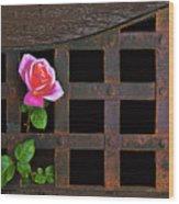 Rose On Trellis Wood Print