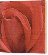 Rose-paintdaubs-2 Wood Print