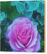 Rose Petal Perfection Wood Print