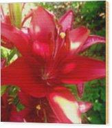 Rose Pink Lily Wood Print