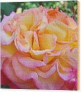 Rose Pink Yellow Rose Flower 2 Rose Garden Giclee Prints Baslee Troutman Wood Print