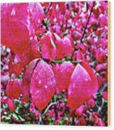 Rose Red 2 Wood Print