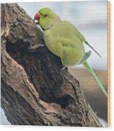 Rose-ringed Parakeet 03 Wood Print