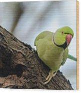 Rose-ringed Parakeet 04 Wood Print