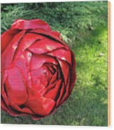 Rose Sculpture Wood Print