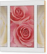 Rose Series  Wood Print