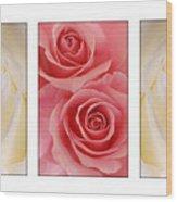Rose Series  Wood Print