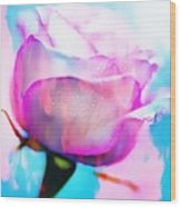 Rose Soft Pink Silked In Thick Paint Wood Print