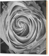 Rose Spiral Black And White Wood Print by James BO  Insogna
