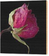 Rose Still Life Wood Print by Robert Ullmann