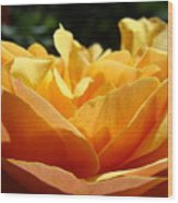 Rose Sunlit Orange Rose Garden 7 Rose Giclee Art Prints Baslee Troutman Wood Print
