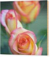 Rose Trio Wood Print