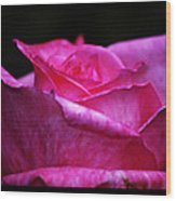 Rose Tryptich Wood Print