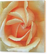 Rose Unfolding Wood Print
