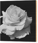 Rose Unfurled In Black And White Wood Print