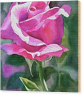Rose Violet Bud Wood Print