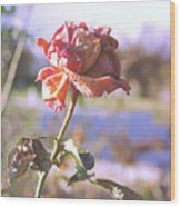 Rose. Wood Print