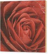 Rose Waiting In The Rain Wood Print