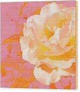 Rose With Pink Background Wood Print