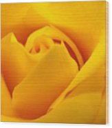 Rose Yellow Wood Print