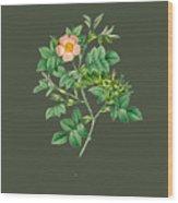 Rose102 Wood Print