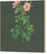 Rose105 Wood Print
