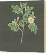 Rose107 Wood Print