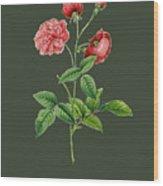 Rose113 Wood Print