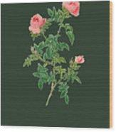 Rose122 Wood Print