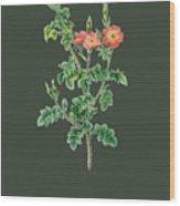 Rose124 Wood Print