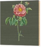 Rose133 Wood Print