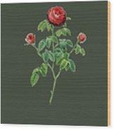 Rose134 Wood Print