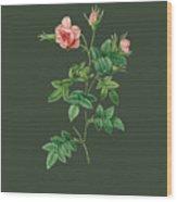 Rose136 Wood Print