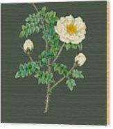 Rose142 Wood Print