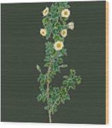 Rose157 Wood Print