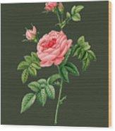 Rose61 Wood Print